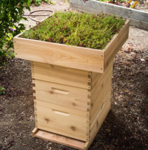 Plants on the roof of your hive!