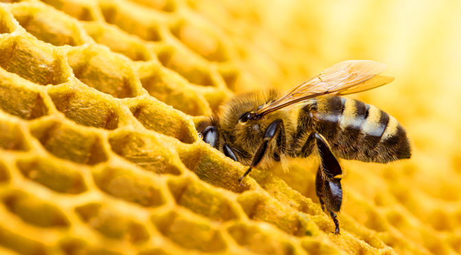 Looking for a Beekeeping course in 2019?